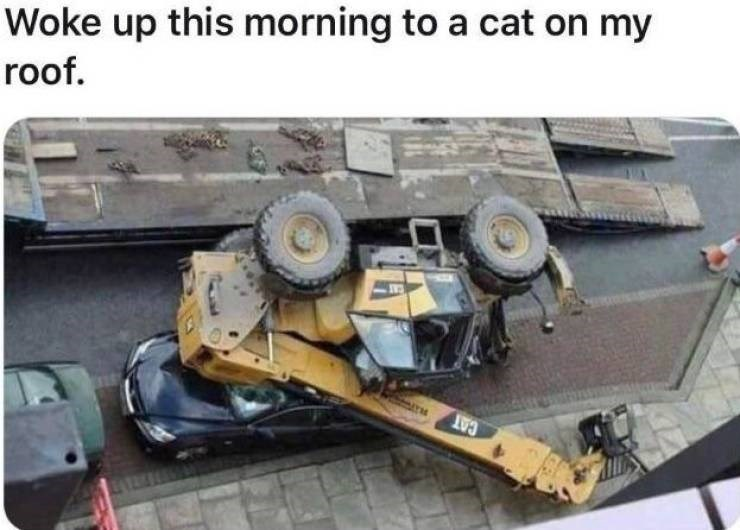 unlucky - Motor vehicle - Woke up this morning to a cat on my roof. AT