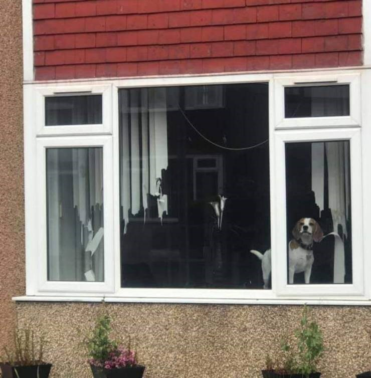 unlucky - Window dog that ate up all the vertical blinds