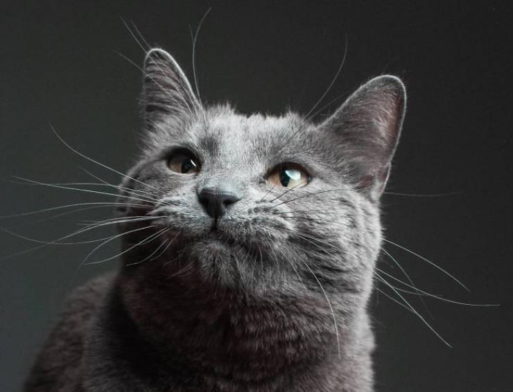 Cat portrait with gumption face