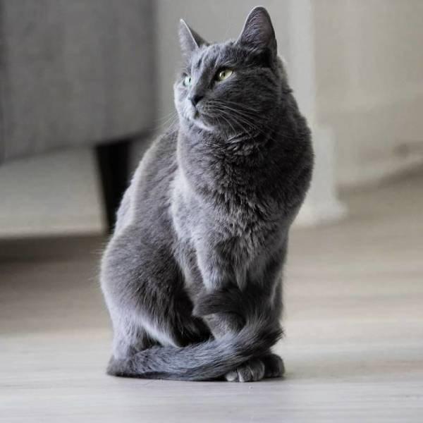 Cat portrait of innocence