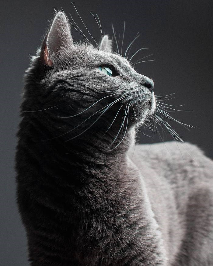 Cat profile portrait with perfect lighting