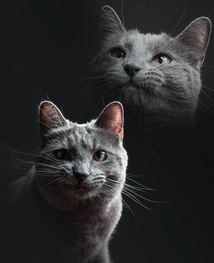 photographed cat portrait with multiple exposures for different moods