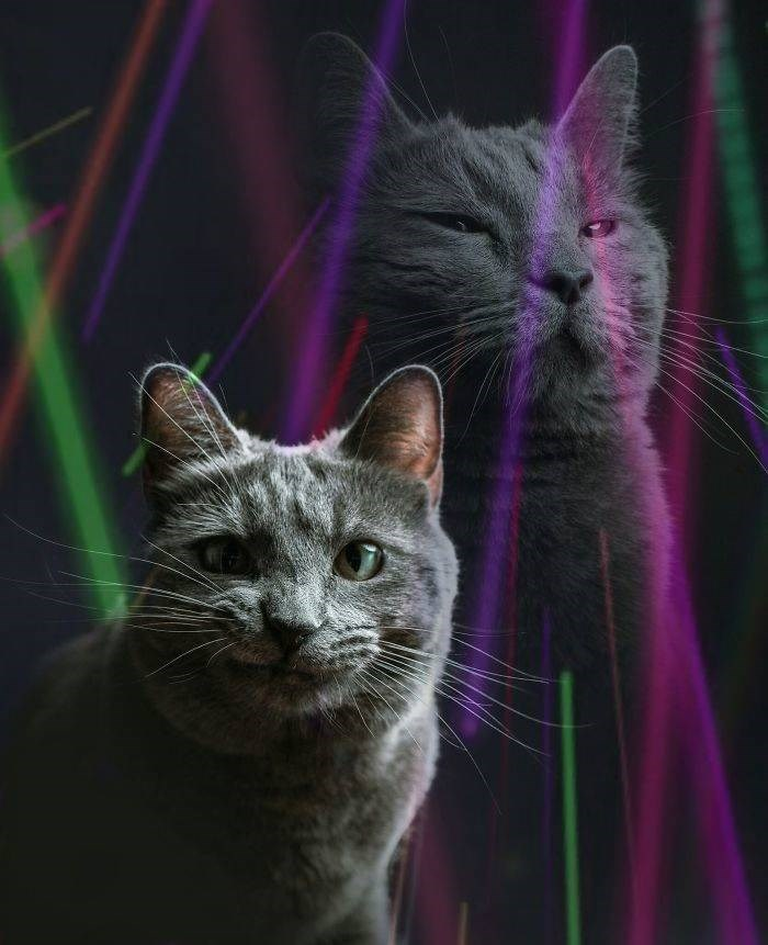 Cat portrait with cheesy laser beams and double exposure for moods