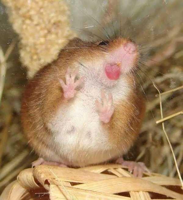 animals licking glass - Mammal