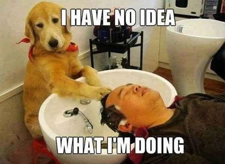Dog - IHAVE NO IDEA WHAT-IM-DOING