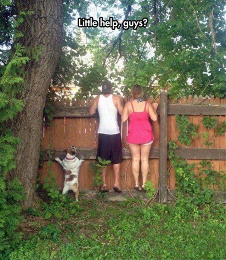 Dog - Tree - Little help, guys?