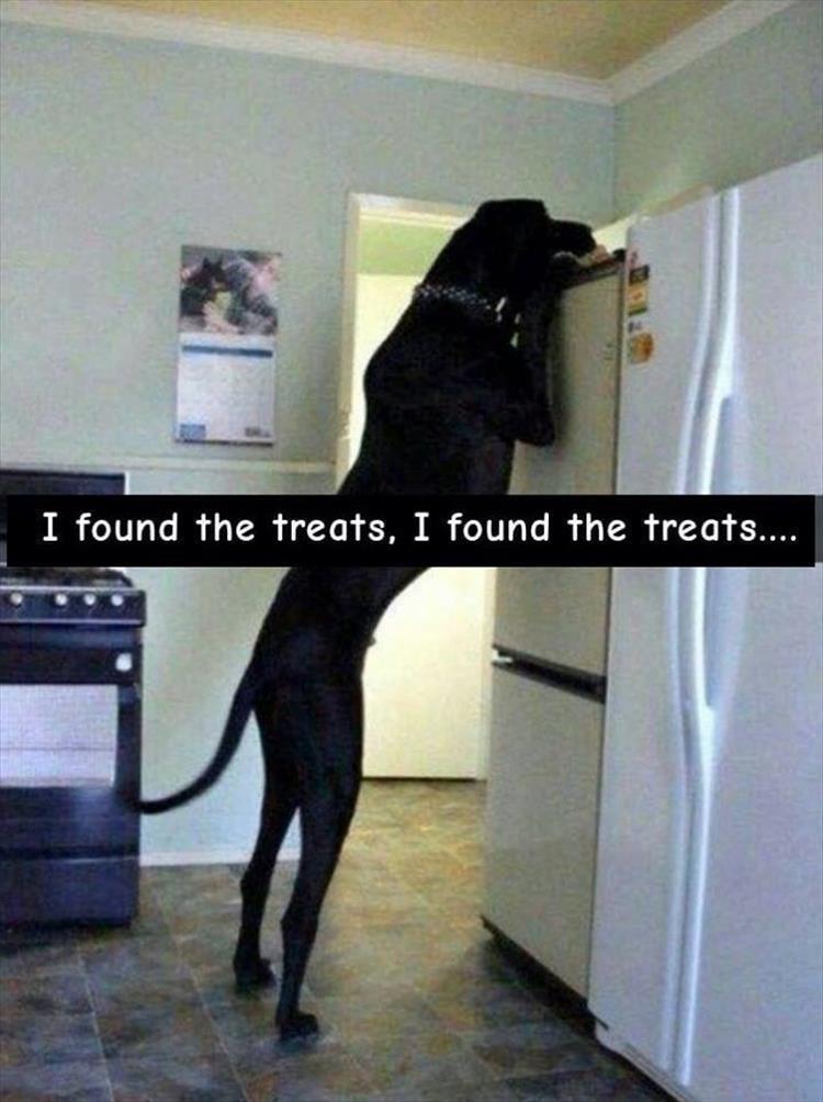 Dog - Dog - I found the treats, I found the treats...