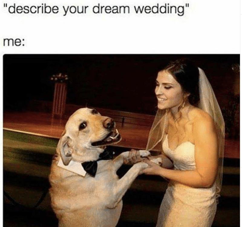 """Dog - Facial expression - """"describe your dream wedding"""" me:"""