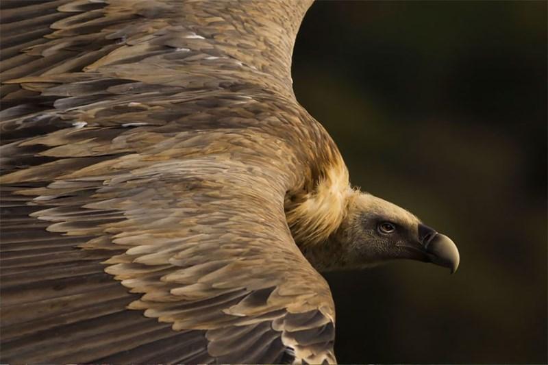 national geographic animal photos - Bird