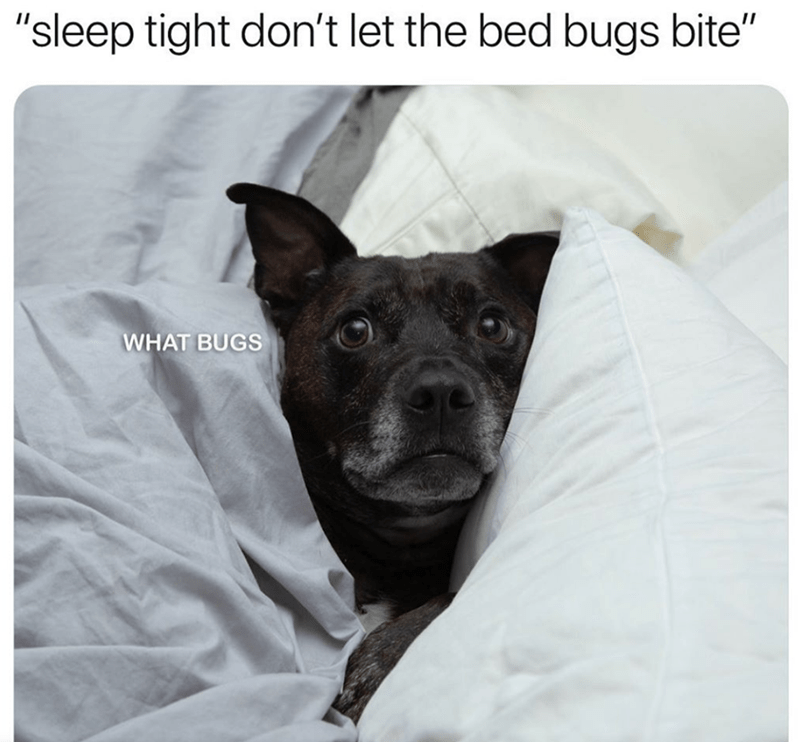 """Dog - Dog - """"sleep tight don't let the bed bugs bite"""" WHAT BUGS"""