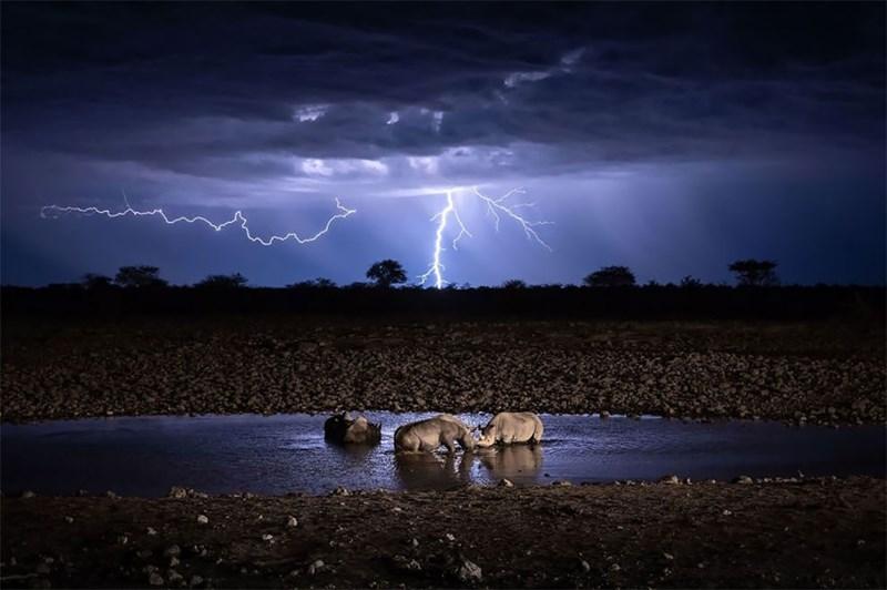 national geographic animal photos - Thunderstorm