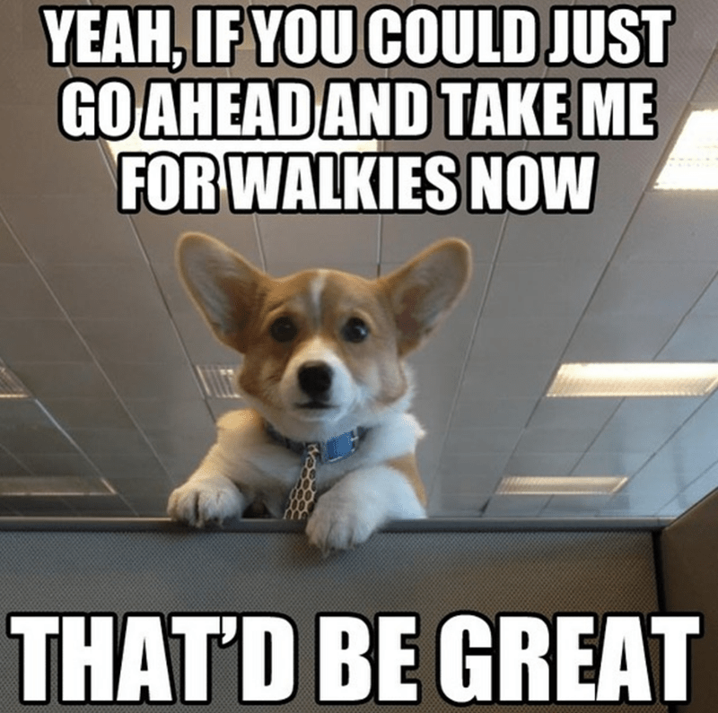 Dog - Dog - YEAH,IF YOU COULD JUST GOAHEAD AND TAKE ME FOR WALKIES NOW THATD BE GREAT