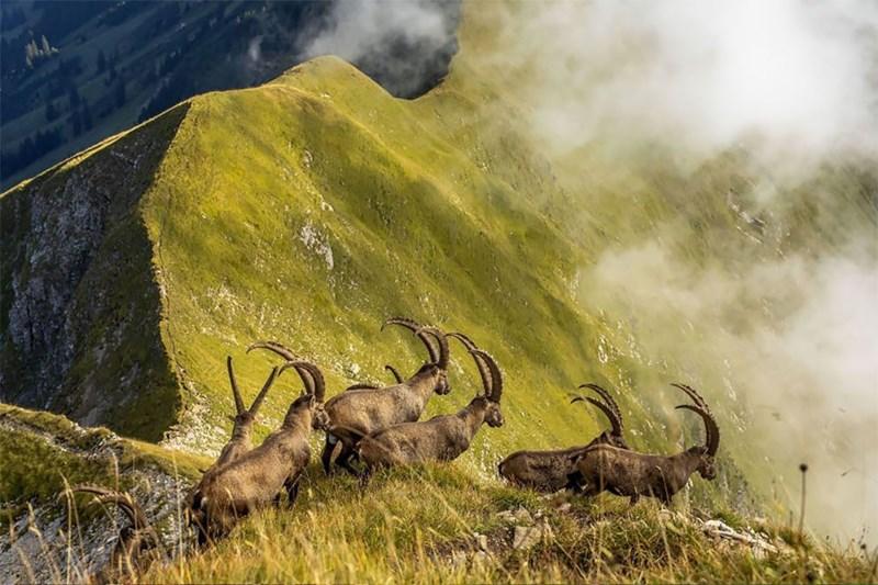 national geographic animal photos - Wildlife