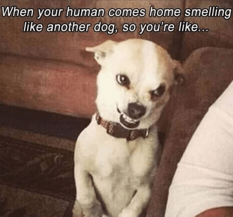 Dog - Dog - When your human comes home smelling like another dog, so you're like.co.