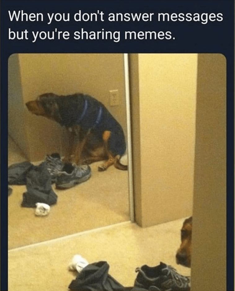 Dog - Text - When you don't answer messages but you're sharing memes.