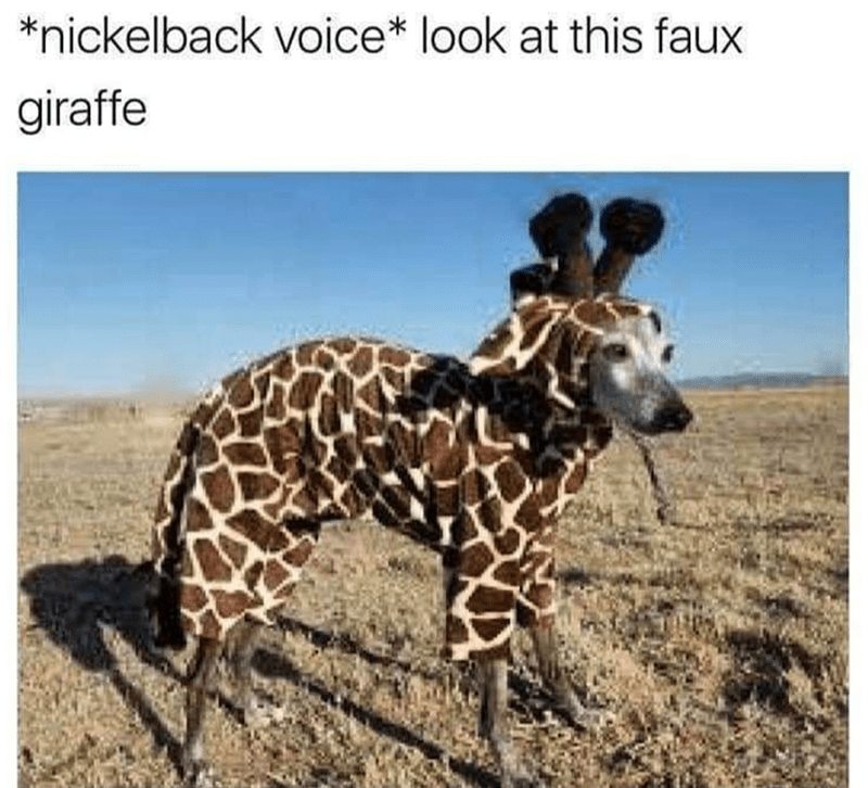 Dog - Terrestrial animal - *nickelback voice* look at this faux giraffe