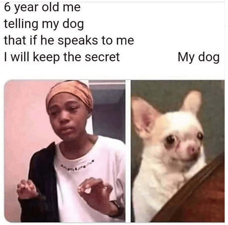 Dog - Face - 6 year old me telling my dog that if he speaks to me I will keep the secret My dog