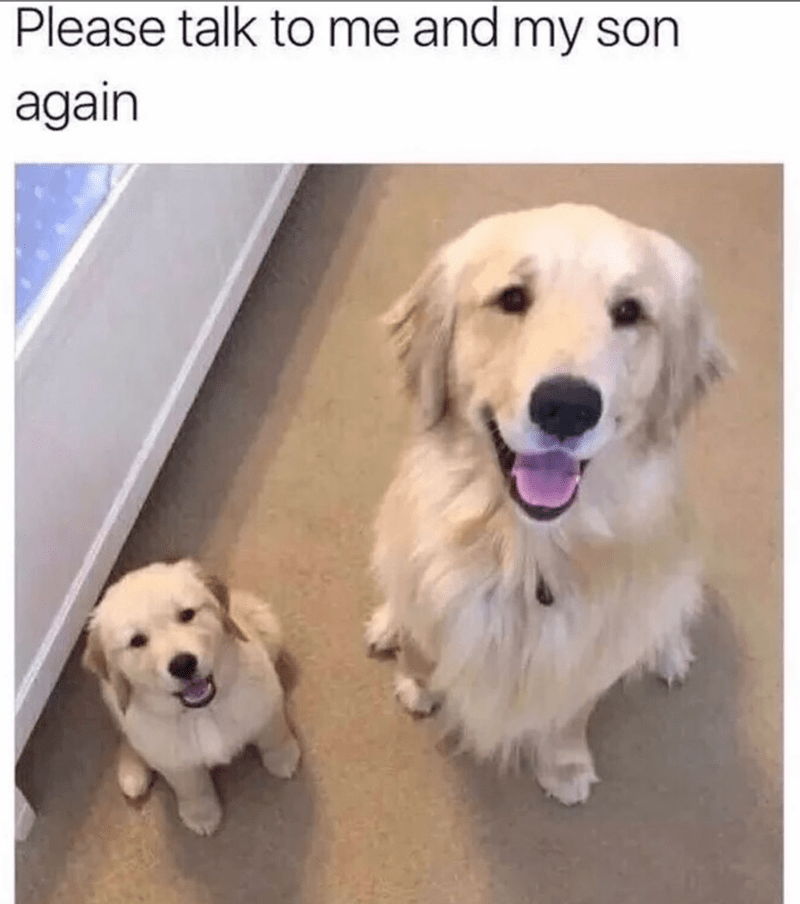 Dog - Dog - Please talk to me and my son again