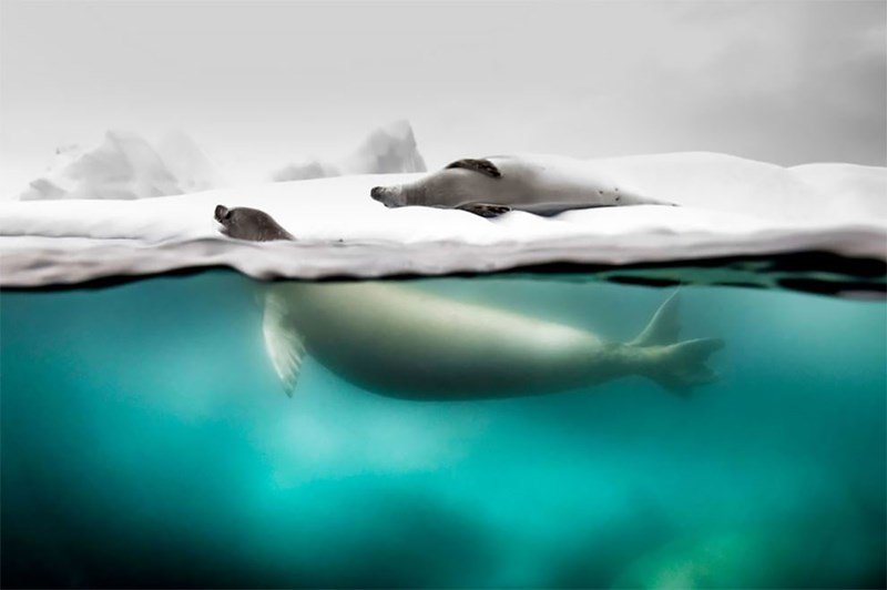 national geographic animal photos - Water