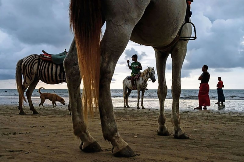 national geographic animal photos - Horse