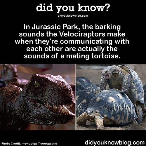 Galápagos tortoise - did you know? didyouknowblog.com In Jurassic Park, the barking sounds the Velociraptors make when they're communicating with each other are actually the sounds of a mating tortoise. didyouknowblog.com Photo Credit: movieclips/freerepublic