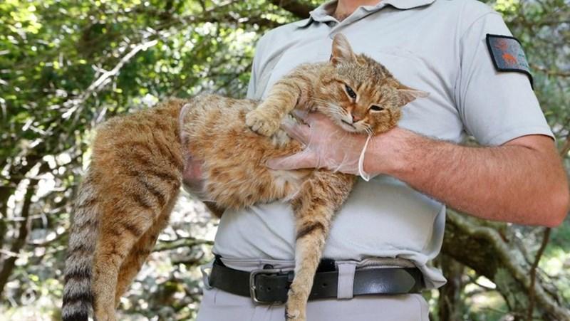 long cat - Cat - 14