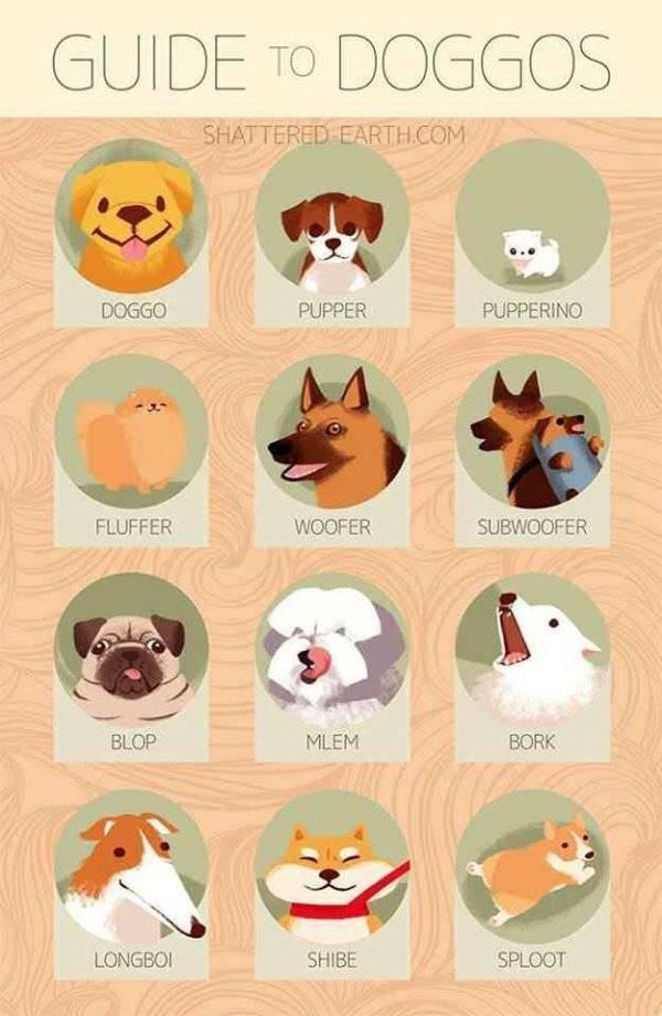 Chart cute doggos - 9320362496