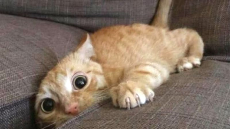a cute picture of a ginger cat half hiding in a couch
