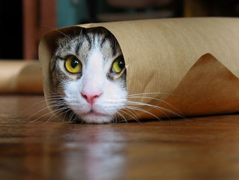 a cute picture of a cat rolled up in brown paper