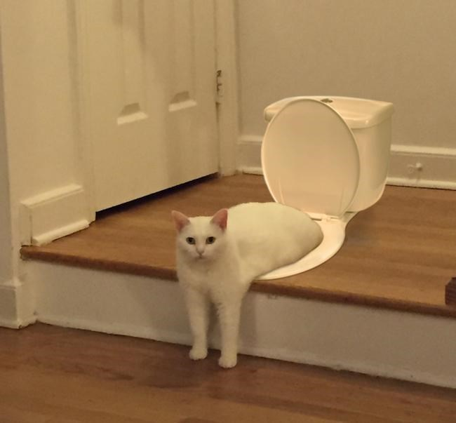 a cute picture of a cat sitting on a toilet on the ground