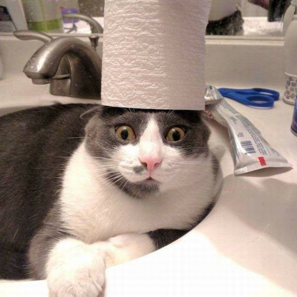 a cute picture of a white and grey cat sitting in a sink with a toilet roll on its head