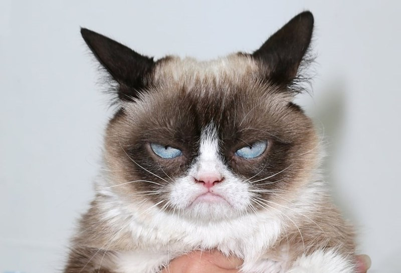 a cute picture of an angry cat