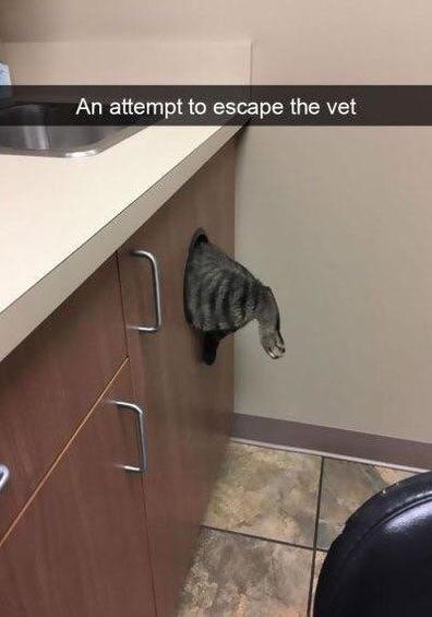 a cute picture of a cat halfway through a bin hole