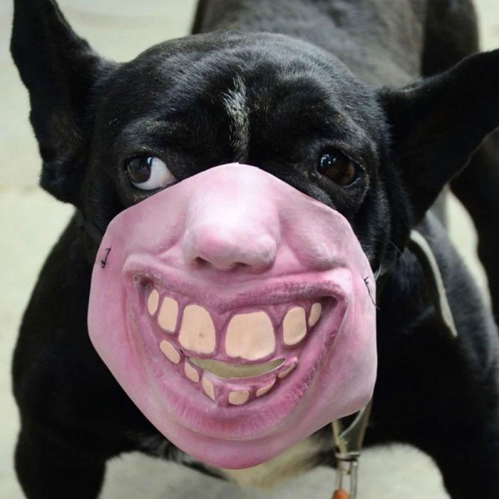 dog with human mask - Dog breed