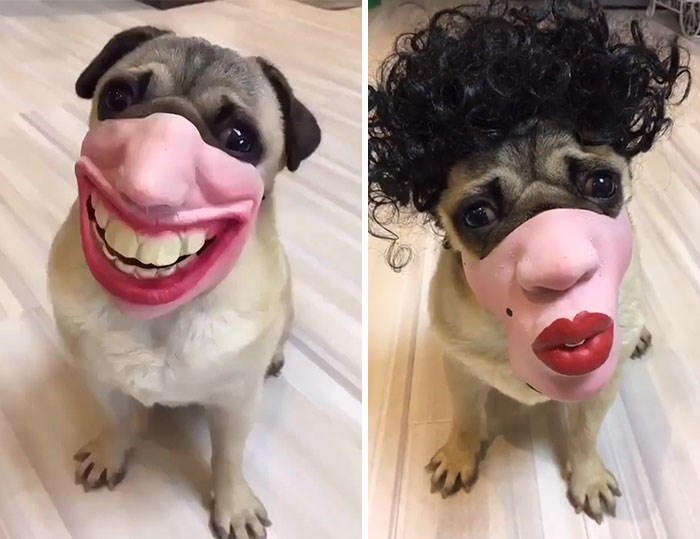 dog with human mask - Face