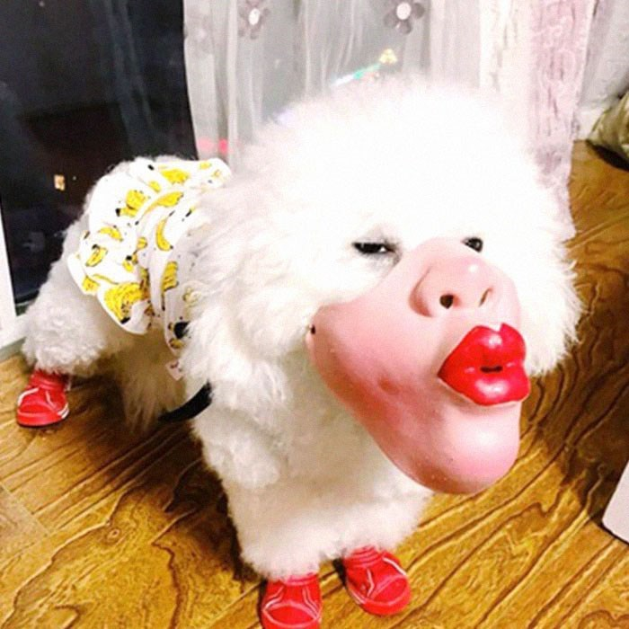 dog with human mask - Nose
