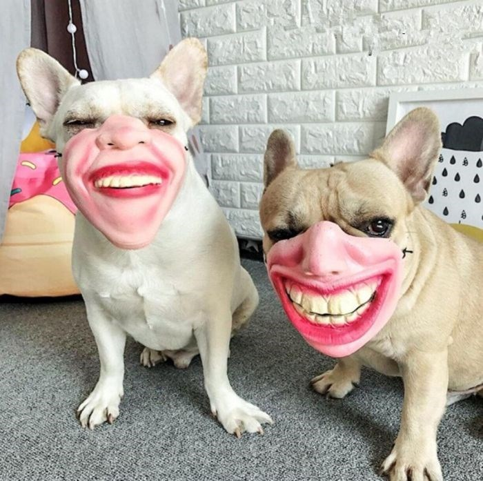 dog with human mask - Vertebrate