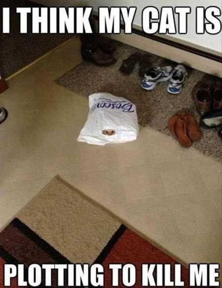 a cute picture of a cat hiding inside a plastic bag