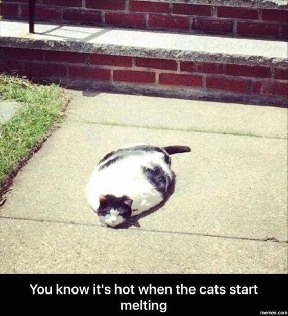 a cute picture of a fat cat lying on the ground