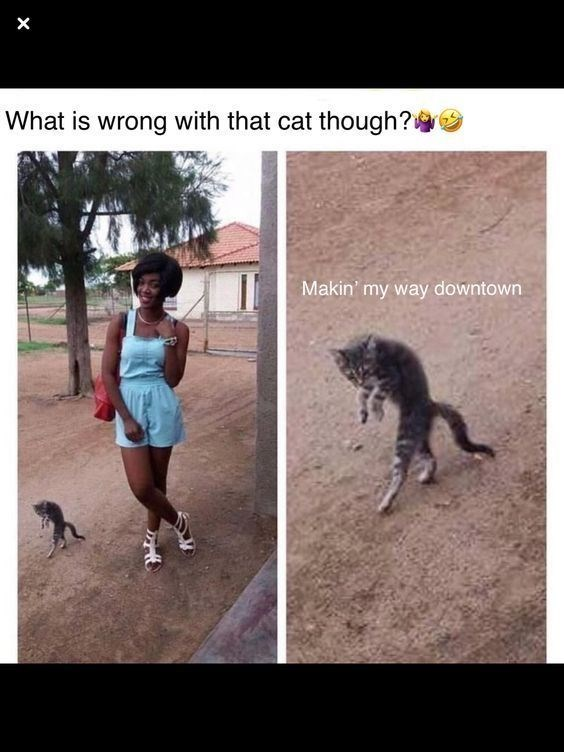 a cute picture of a girl posing and a cat walking on its hind legs