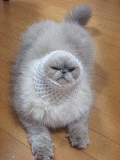 a cute picture of a cat with a foam net over it's head