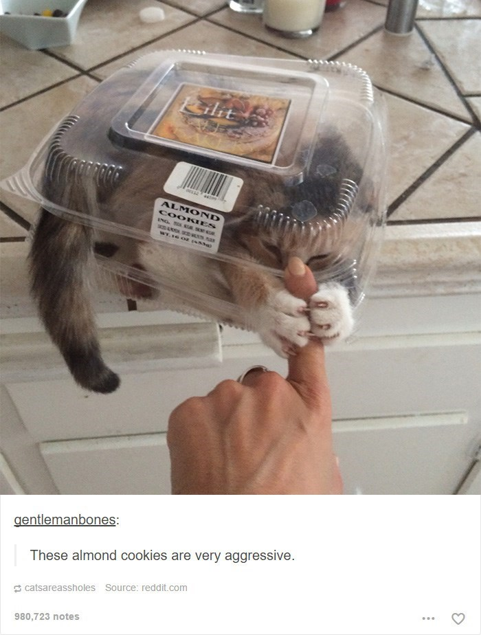 a cute picture of a cat inside a cookie container grabbing someones finger