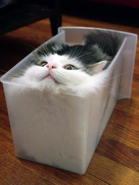 a cute picture of a grey and white cat inside a plastic box