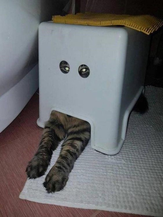 a cute picture of a cat sitting inside a plastic stool with only its eyes and front legs showing