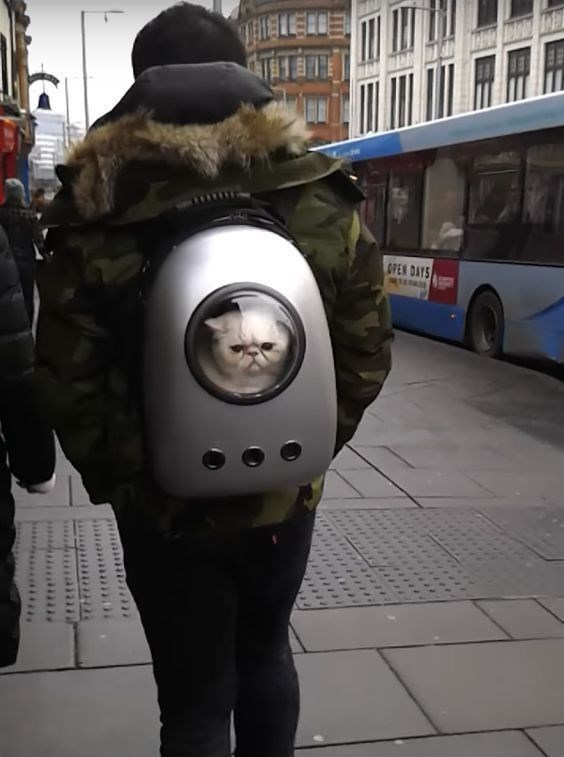 a cute picture of a cat sitting inside a backpack with a plastic peeping hole