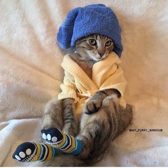 a cute picture of a cat with a towel on its head, wearing a dressing gown and socks