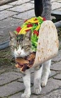 a cute picture of an angry cat wearing a taco costume