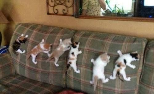 a cute picture of six cats climbing on a couch cushion