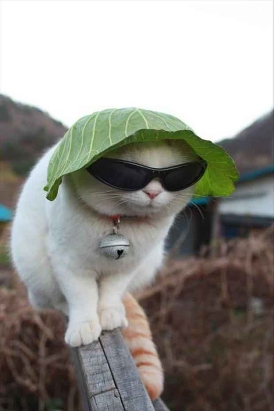 a cute picture of a cat with a leaf on its head wearing sunglasses