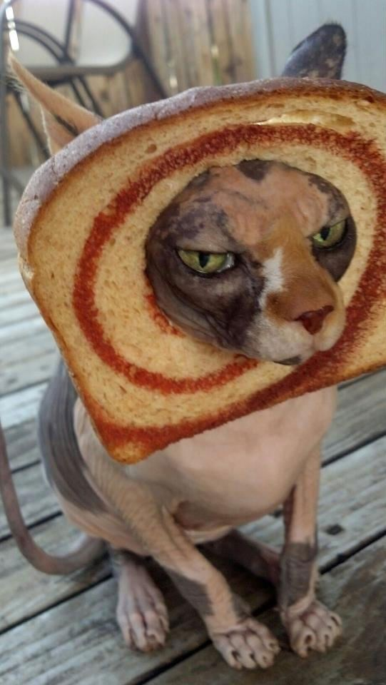 a cute picture of a hairless cat with cinnamon bread stuck over its head